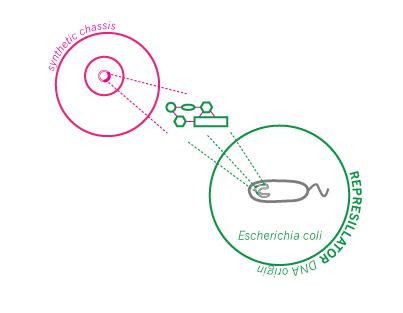 Lunchtimer_diagram