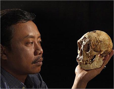 Cranio di Homo floriesiensis