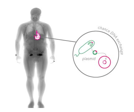 keratinstomach_diagram